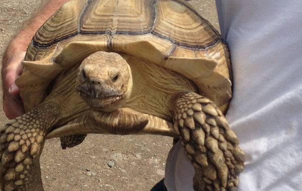 Reptile & Mammal Amnesty