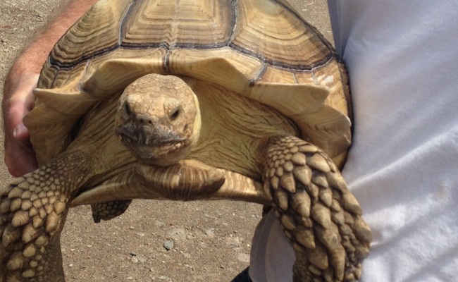 Suffolk SPCA Reptile and Mammal Amnesty